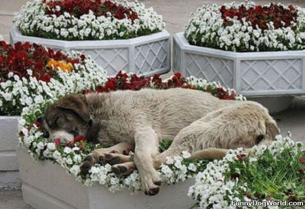 Flower Pot Dog
