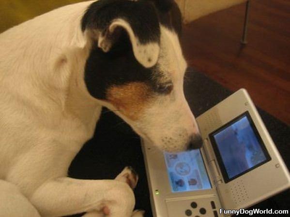 Gamer Dog