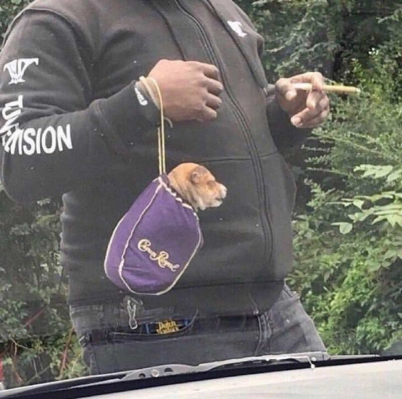 Got The Puppy In The Bag