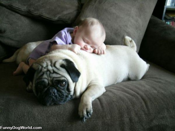 Great Pillow Pug