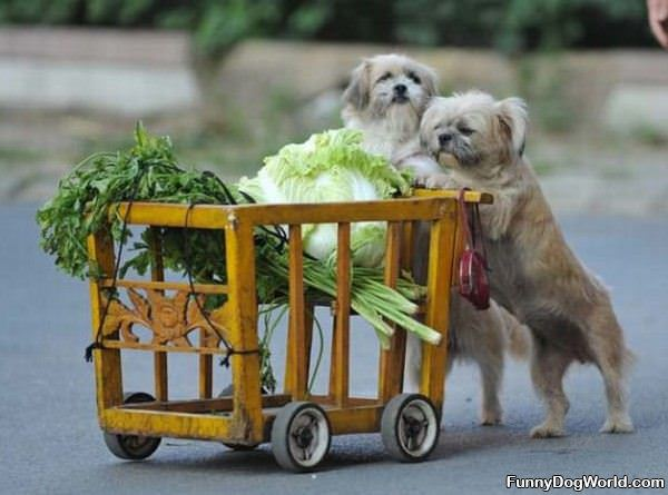 Grocery Dogs