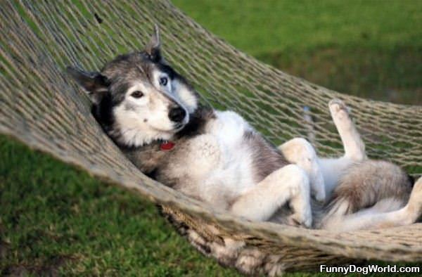 Having Out Relaxing Dog