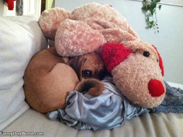 Hiding Here