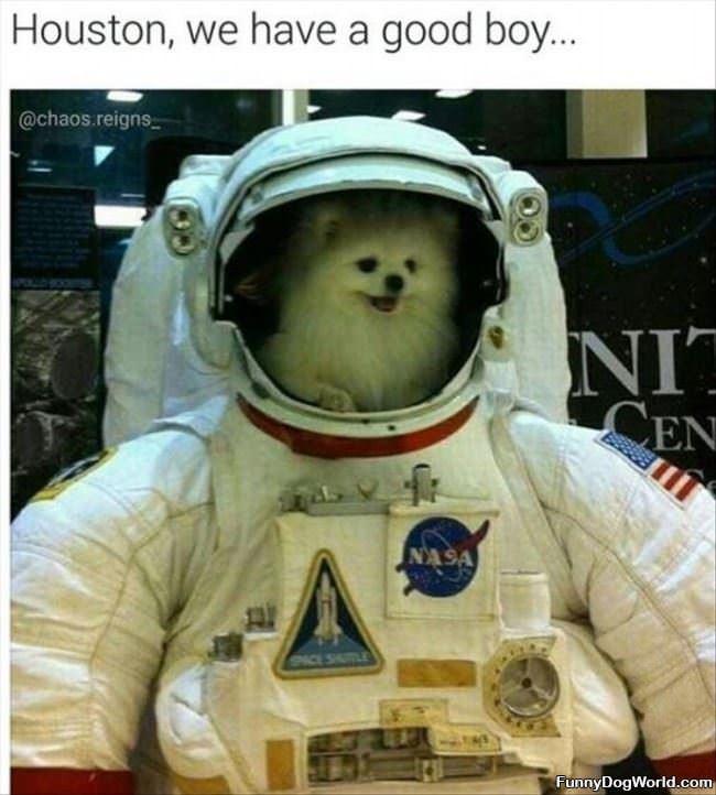 Houston We Have A Good Boy