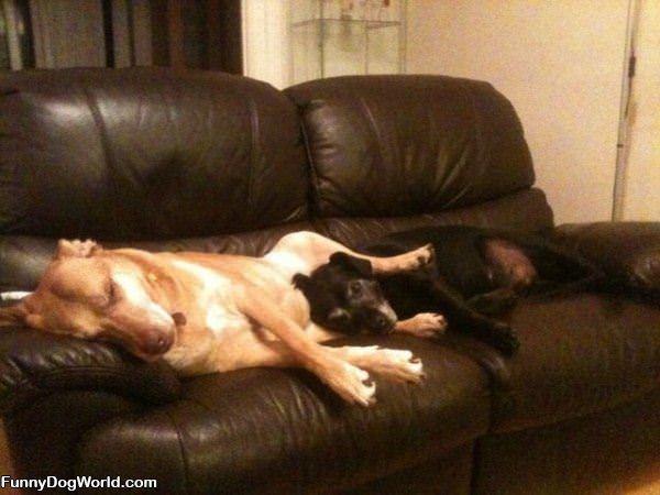 How We Like To Sleep