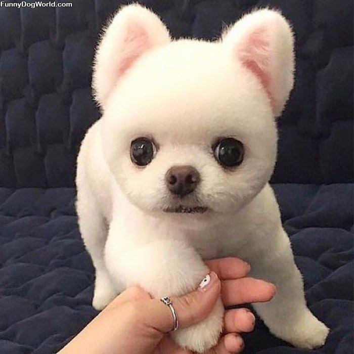 I Am A Fuzzy Pup