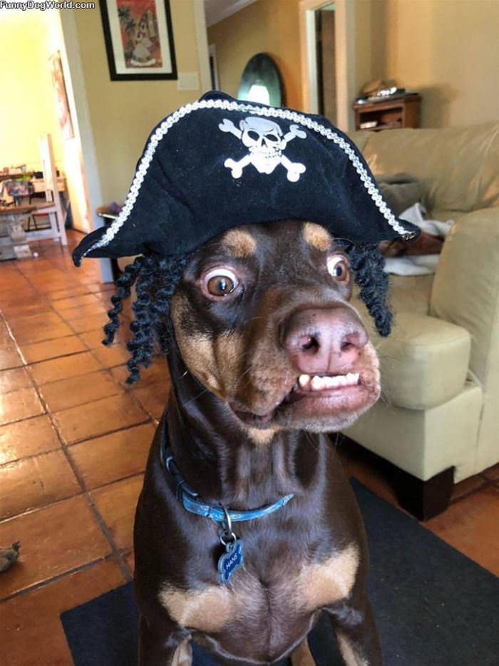 I Am A Pirate