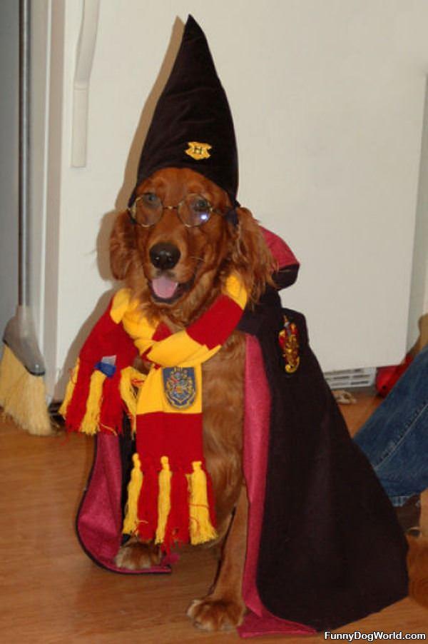 I Am A Wizard