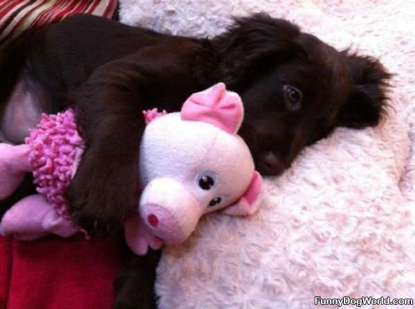 I Am Just Cuddling Puppy