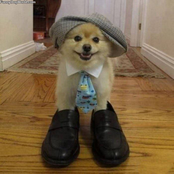 I Am Ready For Work | Funnydogworld.com