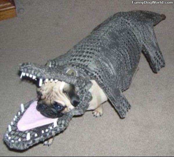 I Are Alligator