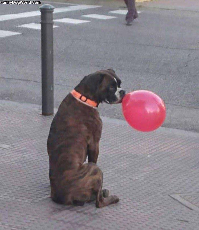 I Has A Balloon