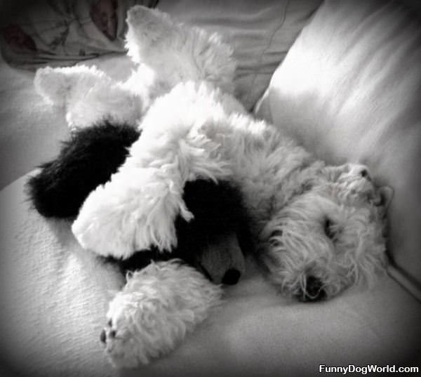 I Have My Teddy