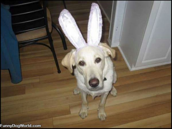 Im A Bunny