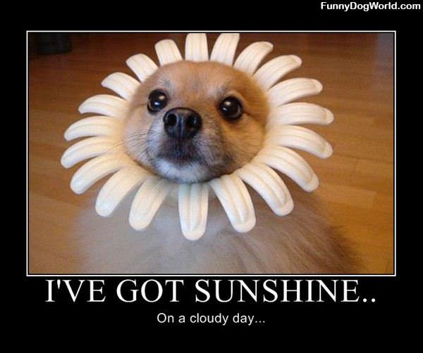 Ive Got Sunshine