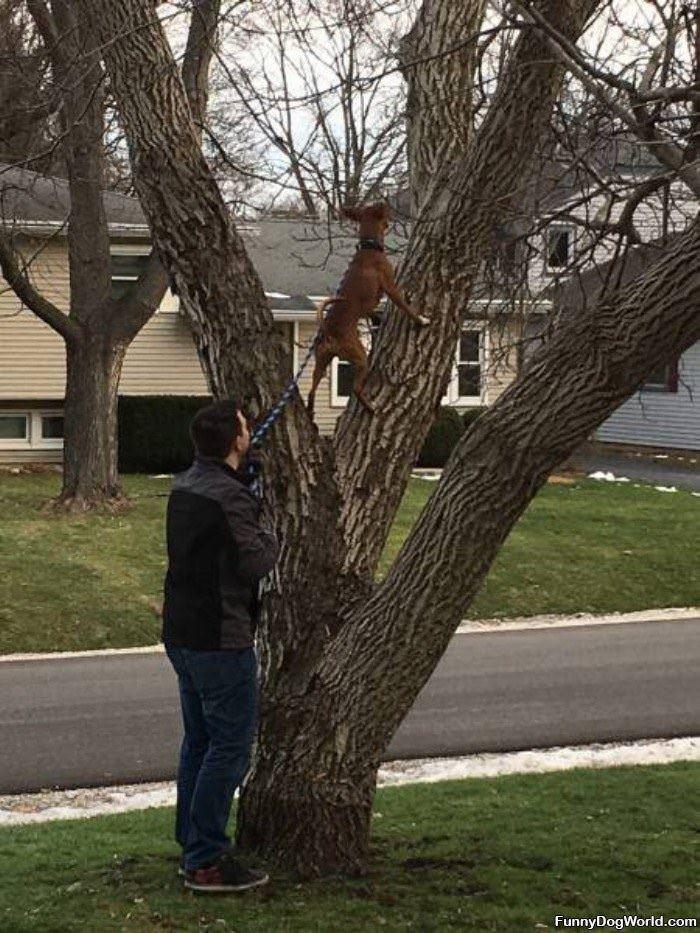 Just My Daily Tree Climb