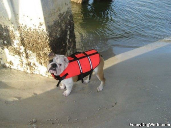 Life Vest Dog