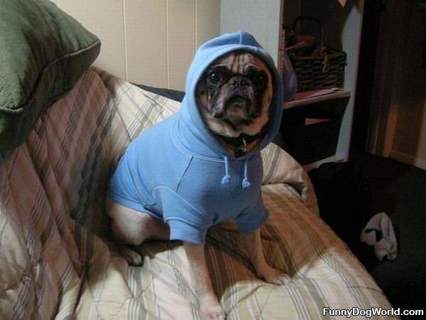 Like My Sweatshirt