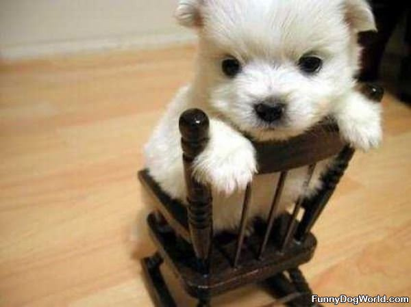 Little Tiny Rocking Chair