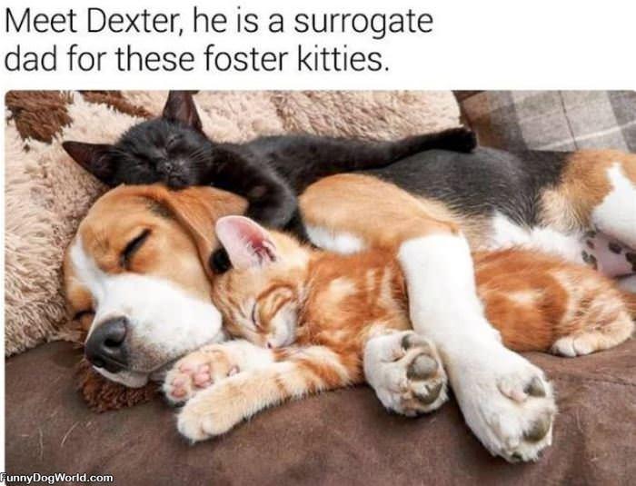 Meet Dexter