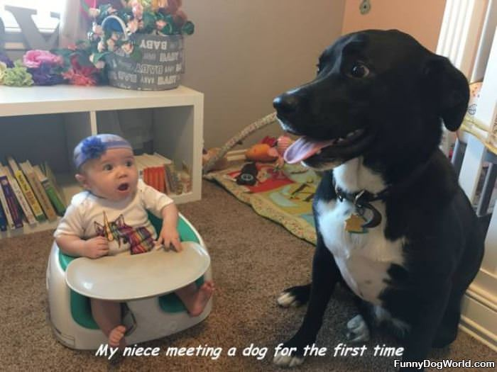 Meeting The Dog For The First Time