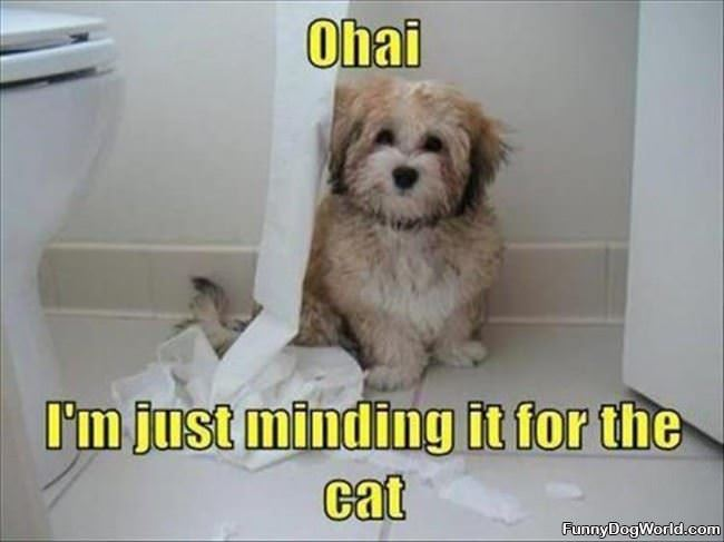 Minding It For The Cat
