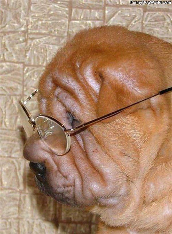 My Reading Glasses