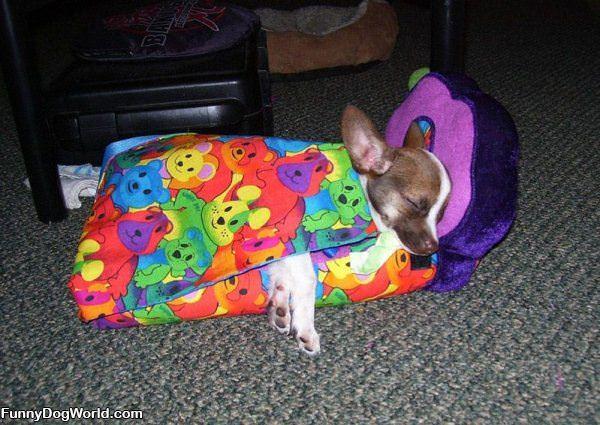 My Warm Bed