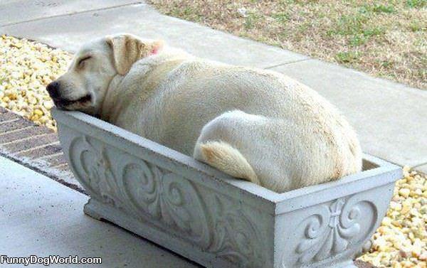 Nice Dog Bed