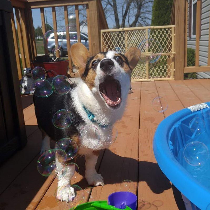 Omg I Love Bubbles