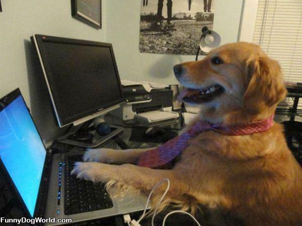 Serious Business Dog