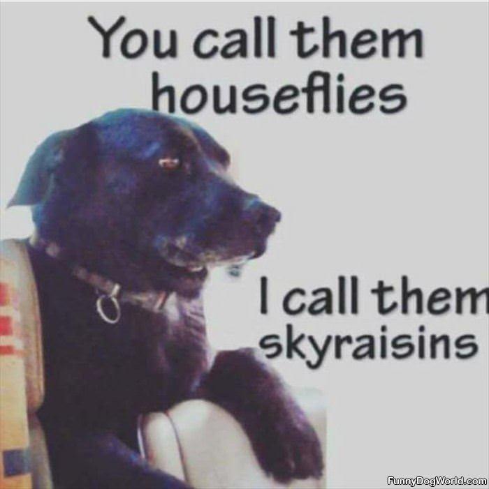 Sky Raisins