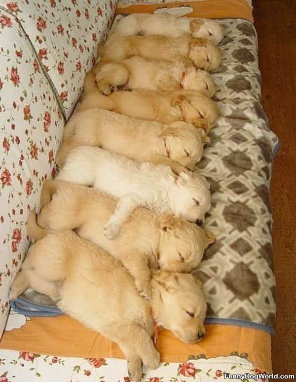 Sleeping In A Row