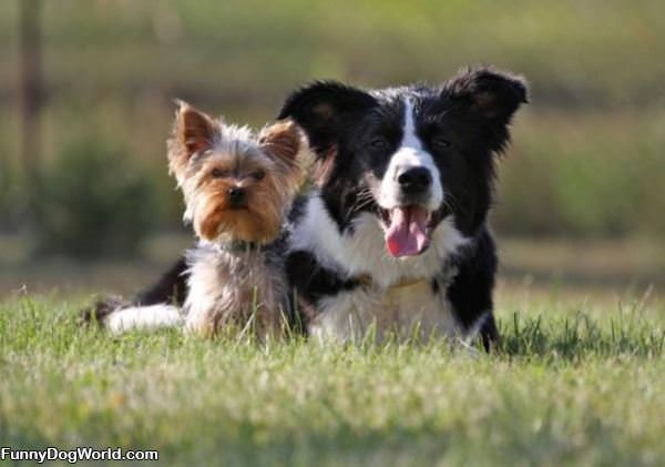 Such Cute Dogs