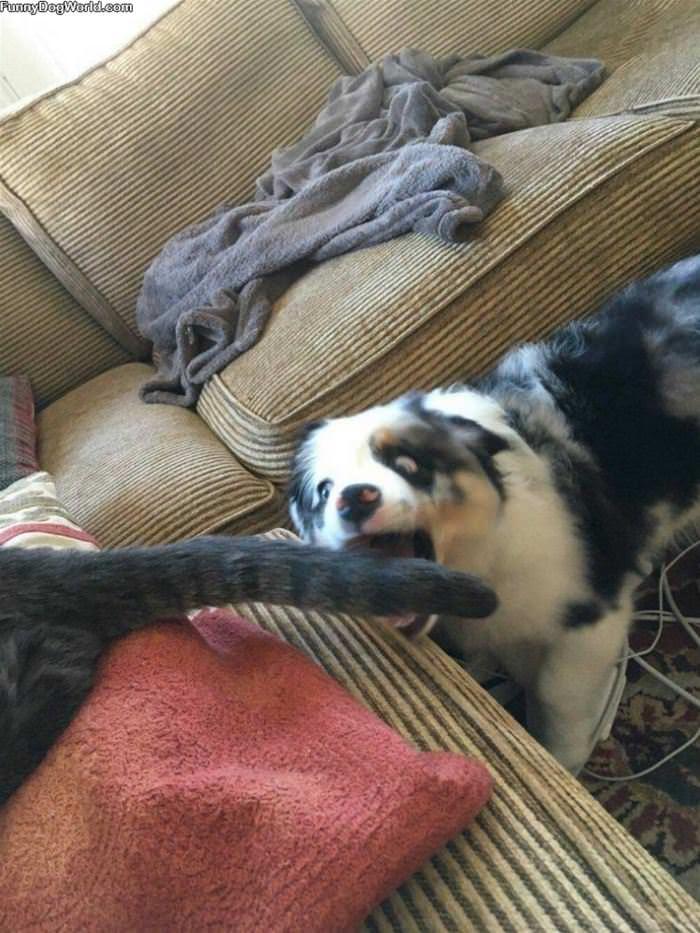 Taking A Bite