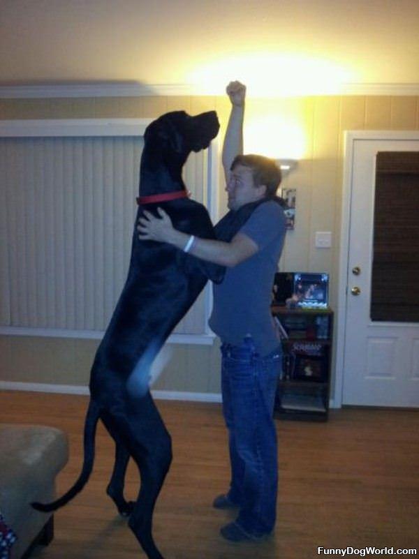 Tall Dog Is Tall