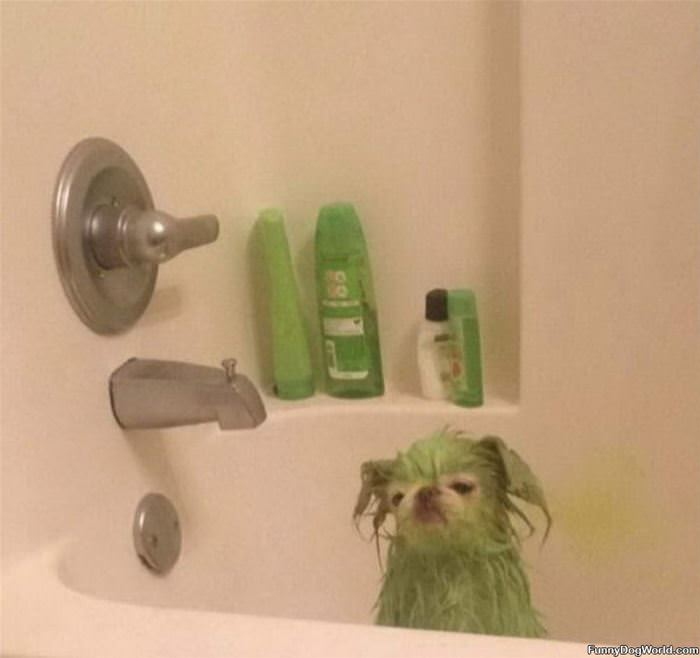 The Green Boi