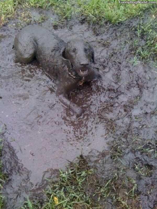 The Mud Dog