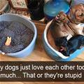 funny dog 4