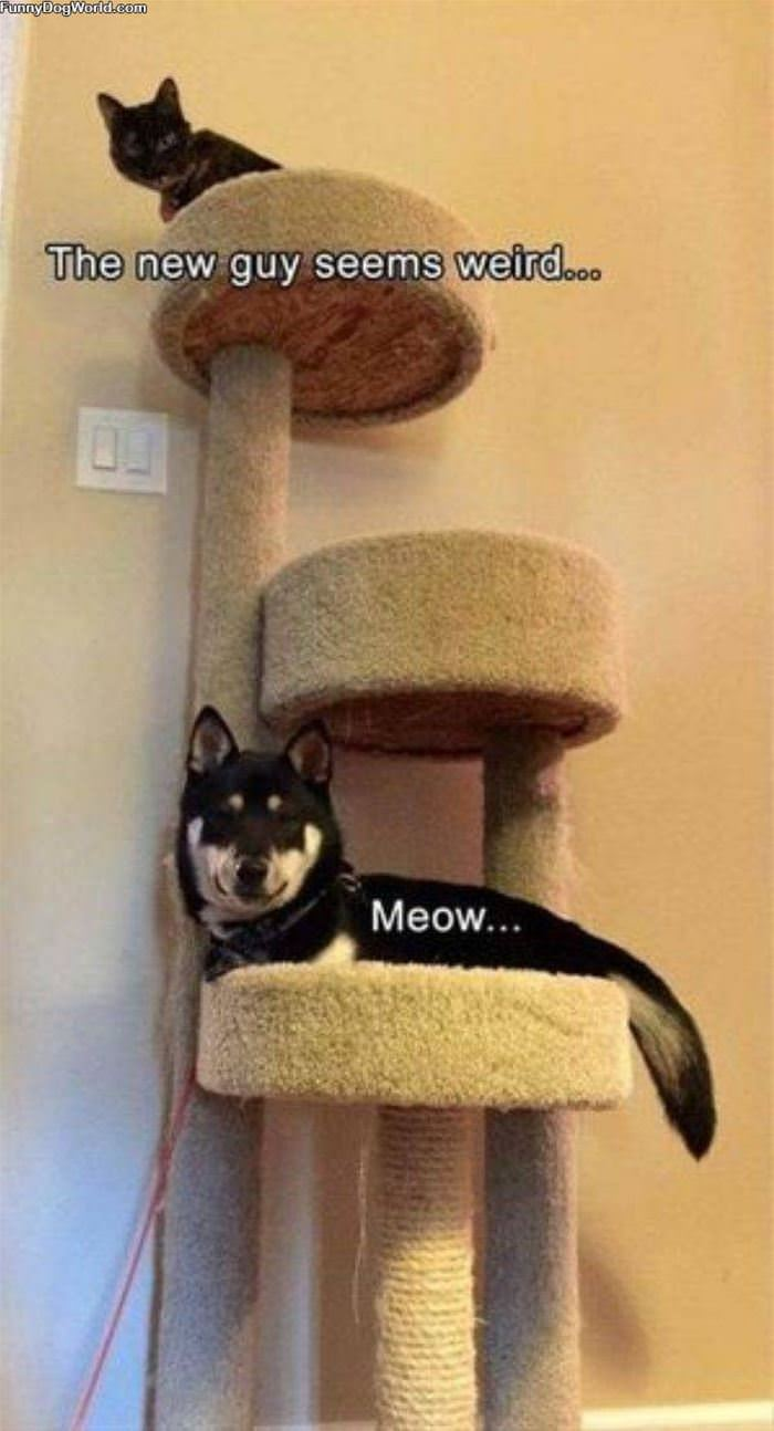 This New Guys Meow