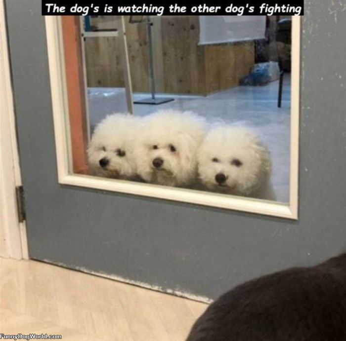 Watchign The Fight