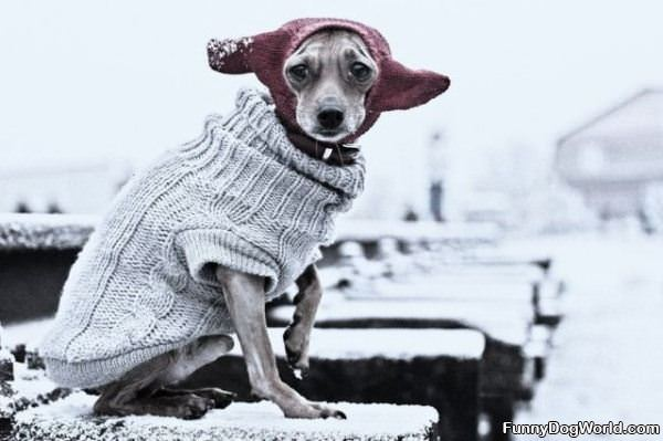 What Its Cold